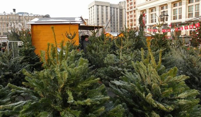 Moszkvában dán és holland karácsonyfákat árulnak