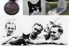 Simon, a tengerészmacska, akinek hősiességét a legmagasabb brit kitüntetéssel jutalmazták