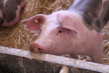 """A """"ketreckorszak"""" végét követelik az állatvédők"""