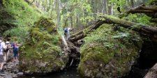 Magyarországon is van még egy őserdőfolt