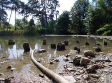 Halott pocsolya a tavirózsás tó helyén