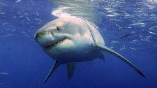 Megszólalt a cápatámadás cseh áldozatának felesége: Az úszómellényre vártunk, másképp vele lettünk volna a vízben