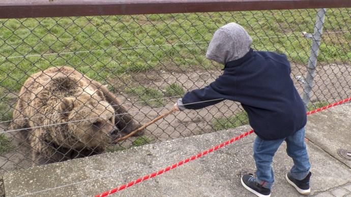 Dráma a veresegyházi medveotthonban