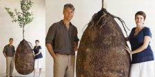 Viszlát koporsós temetés: az organikus zsák segítségével fa lesz az elhunyt testéből