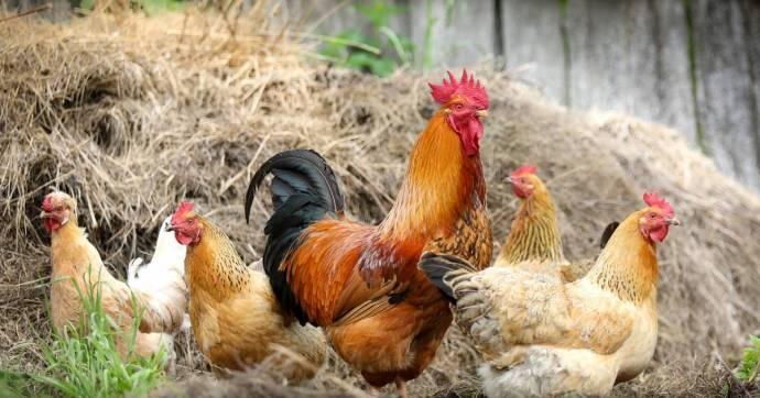 Ha nem elég a koronavírus, már két megyénkben is kimutatták a madárinfluenzát