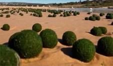 Ausztráliai strandon titokzatos zöld gömböket találtak (videó)