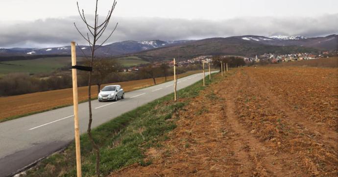 Több száz fát ültetnek Kassa megye útjai mentén