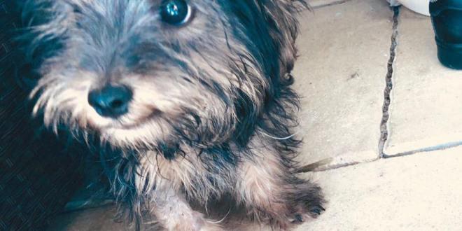 Ráth Orsolya: Gyurcsány kutyájának második levele