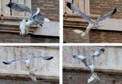 Sirályok és varjak vadásztak Bergoglio galambjaira – Jelek és szimbólumok