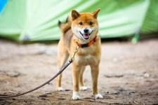 Kutya-ember kapcsolat: A kutyák a gazda személyisége miatt is stresszelnek