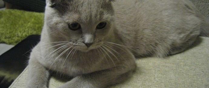Cukikampány: cicát ajándékozott a kislánynak a jó fej Putyin