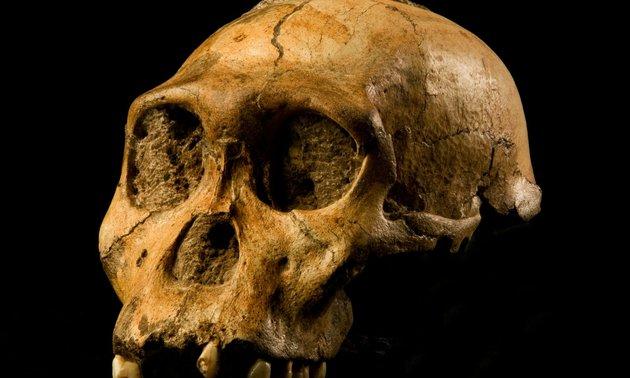 Lényegesen könnyebb volt a szülés a kétmillió évvel ezelőtti emberelődök számára
