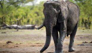 A kihalás szélén áll a népszerű állatfaj