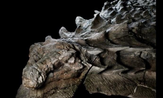 Szinte teljesen ép dinoszauruszt találtak