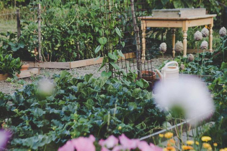 Idő, kesztyű, palánta – mit gondolj át, hogyan csatlakozz közösségi kerthez?