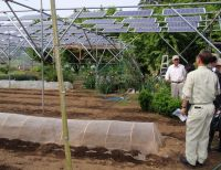 Ingyen áram a zöldségeskertből