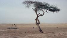 """A Föld """"legmagányosabb fája"""" jelezheti az atomkor kezdetét"""