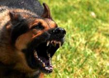 Városi rendőrre támadt a játszótéren egy kutya
