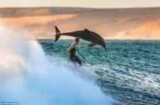 Ausztrál valóság: delfinnel ütközött a szörfös