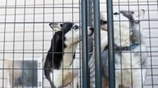 Covid-utóhatás: zuhan az állat-örökbefogadási kedv