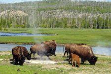 Óriási vérengzés vette kezdetét a nemzeti parkban