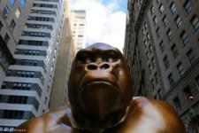 Újabb BLM-szobrot állítottak New Yorkban, ezúttal egy igazi gorillának, tízezer banánnal