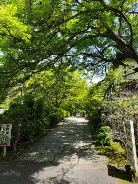 京都で菌を祀って健やかなお腹に|菌塚スポットのある曼殊院門跡へ