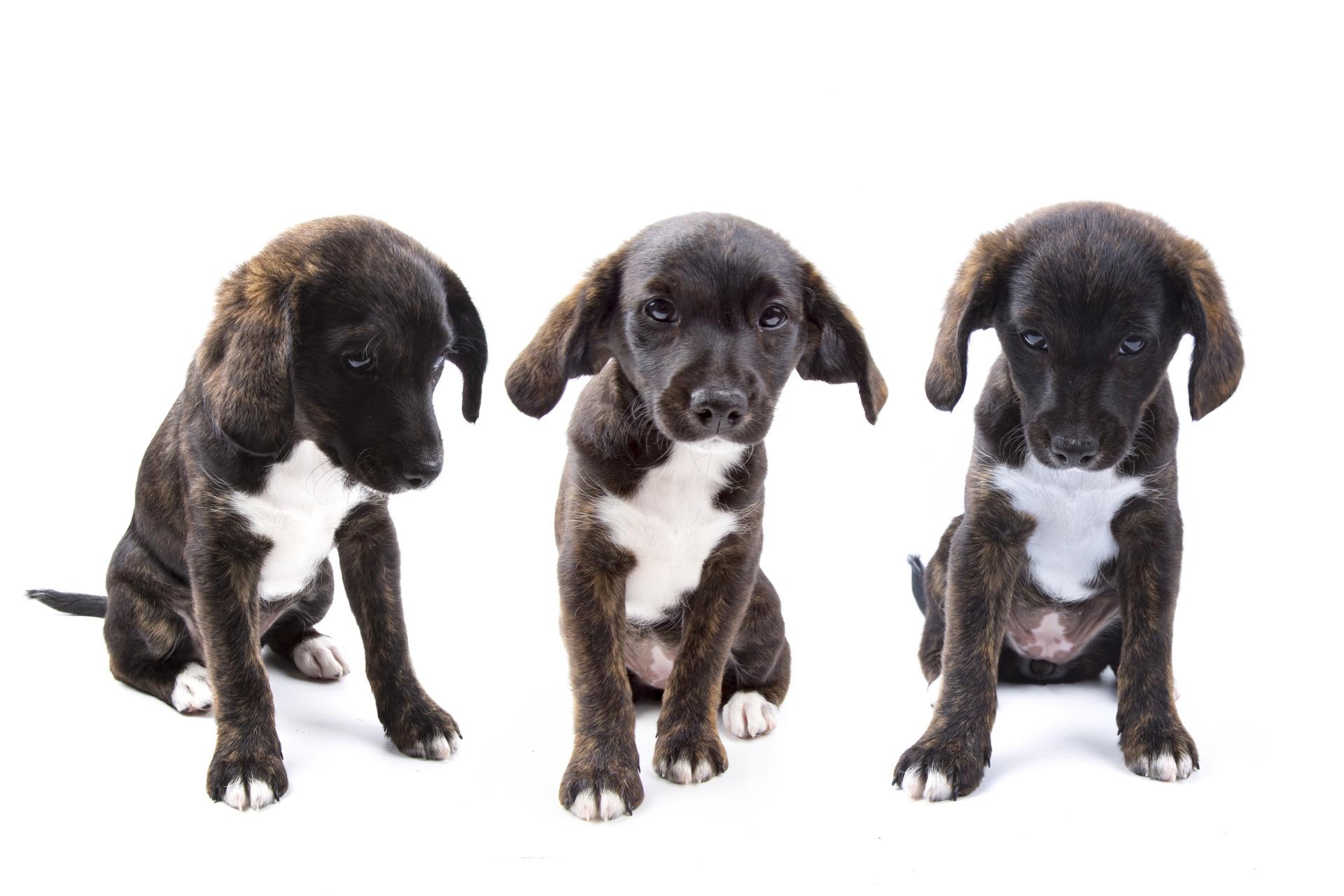 puppy-dog-on-white-14747967449zG