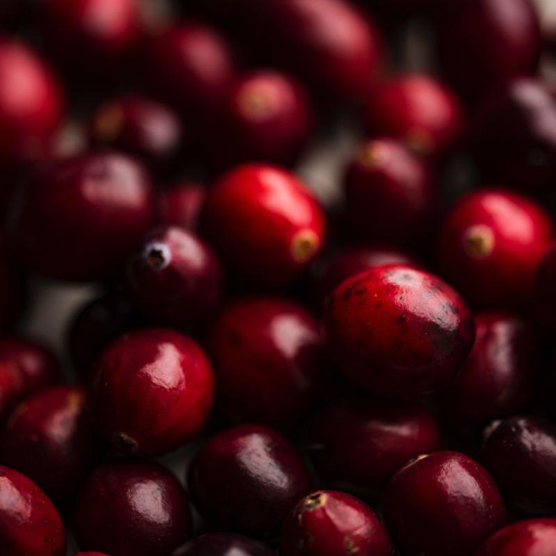 December Harvest: Cranberries