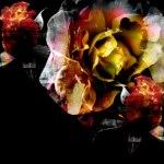 ノイズ感のある薔薇(3パターン)