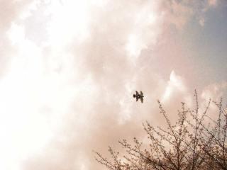 空と木と鳥の写真素材