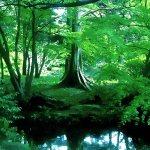 湖と木 差分:日中/夕方/夜