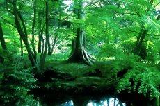 outdoor-scenery-087