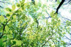 outdoor-scenery-092