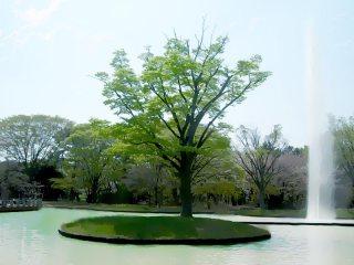 噴水のある公園 差分:日中/夕方/夜