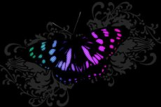 norepeat-butterfly011_2