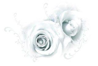 淡い色合いの薔薇(4パターン)