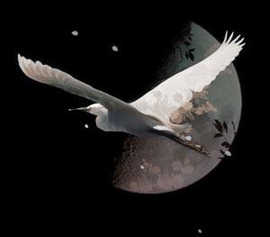 白鷺と半月(5パターン)