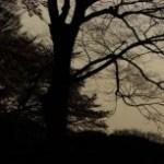 木々の写真素材