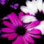 花の写真素材