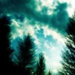 並木の写真素材