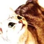 見上げる猫の写真素材
