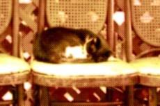 椅子で眠る猫