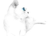 白猫の写真素材(6パターン)