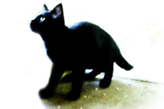 黒い子猫の写真素材