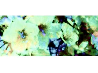 色が滲む花(5パターン)