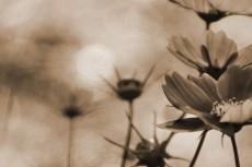 cover-flower001-2