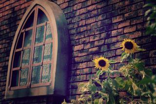 【高解像度】レンガ壁と向日葵がある風景(3パターン)