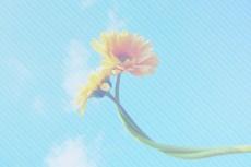 flower374-2