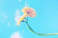 flower374-3